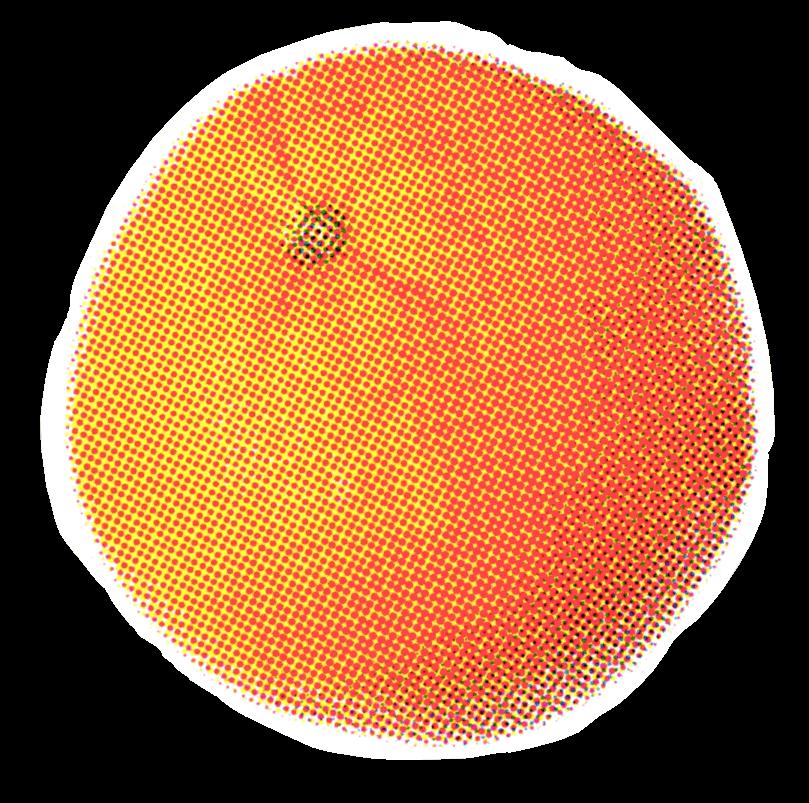 orange_01.png