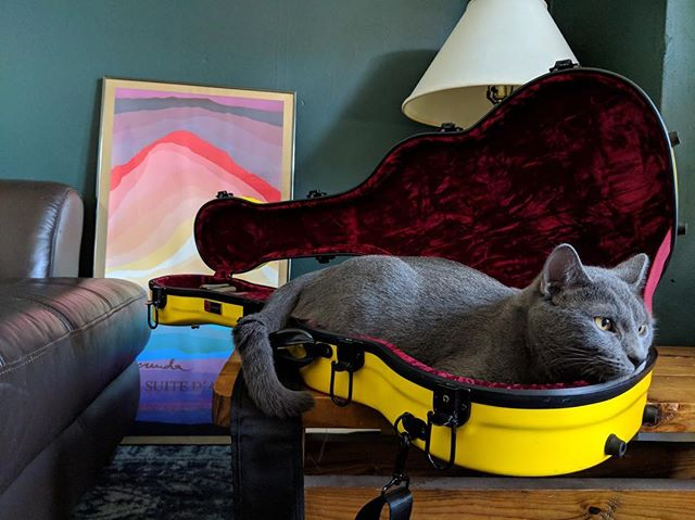 Home from the honeymoon and now it's back to work! Getting ready for this ALBUM RELEASE, November 29th @thecedar ticket link in bio! 📸 @t_2_j_2_d . . . . . . . . . #cat #catsofinstagram #fall2018 #albumrelease #thecedarculturalcenter #minneapolis #minnesota #mplsmusic #mnmusic #baritoneukulele #ukulele