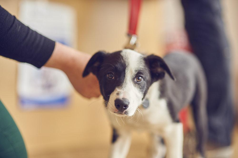 Portlethen-Vet-practice-Dog