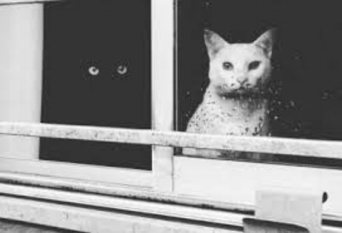 two kitties in window.jpg