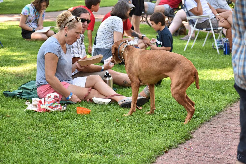 dog eats.jpg