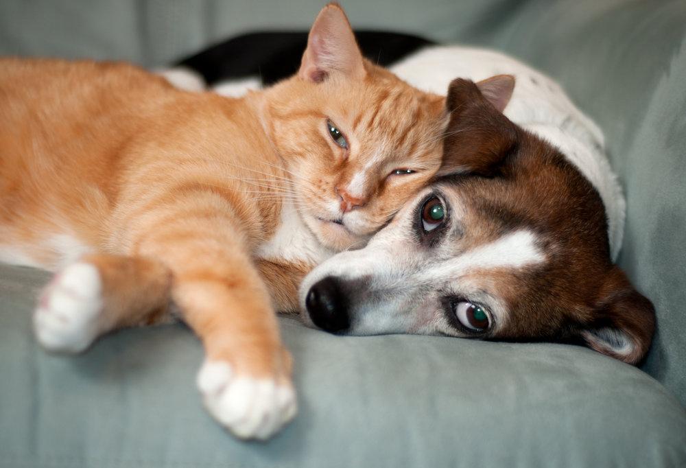 Cat and Dog Pet Damages