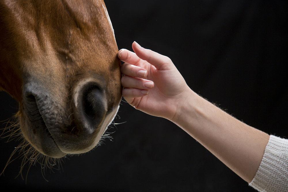 Lady Touching Horse.jpg