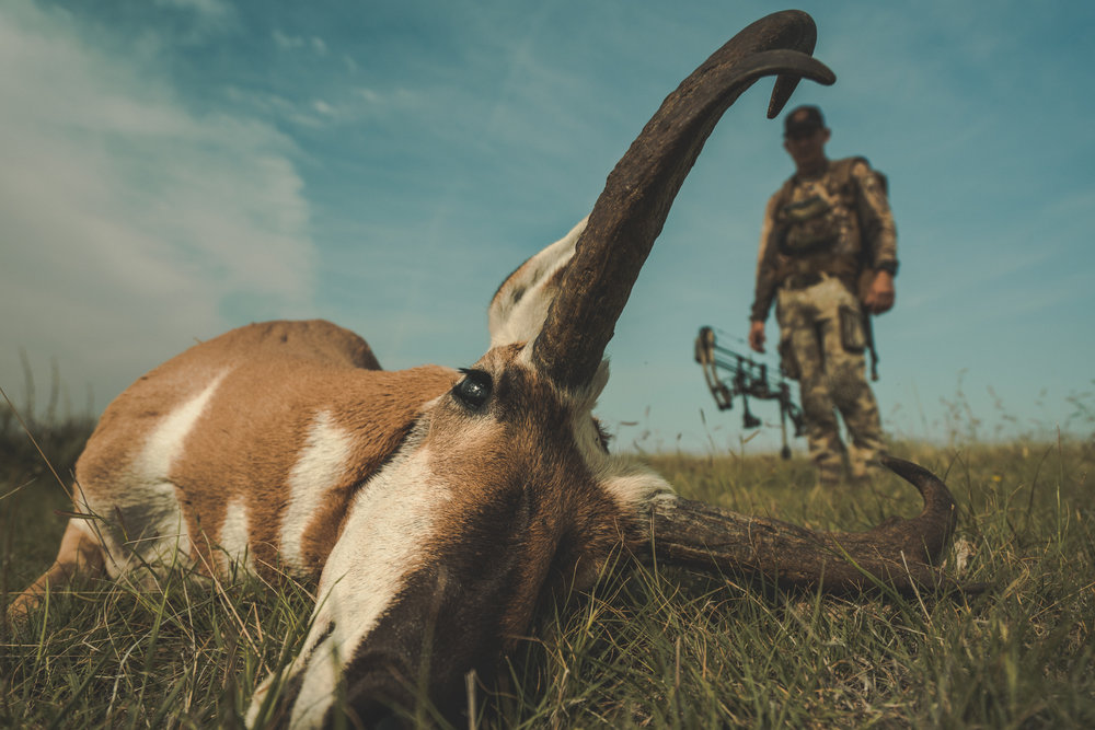 antelope colorado