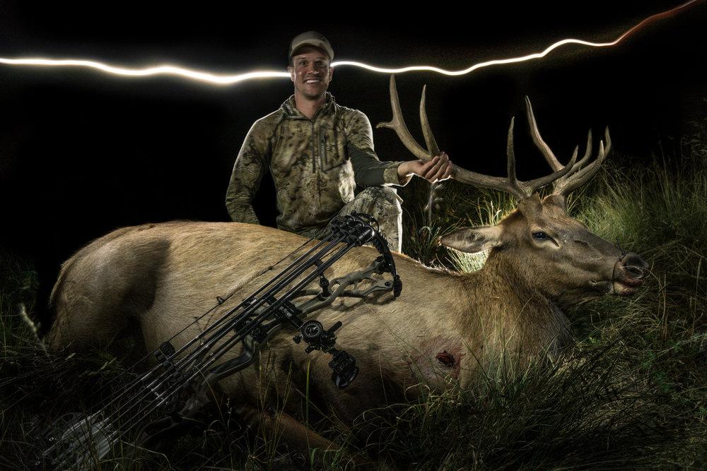 bull elk at night
