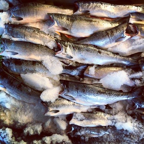 Fresh Salmon.jpg