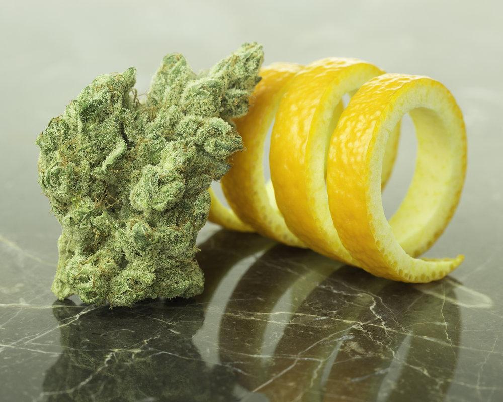 Orange_Tree_Social_012518.jpg