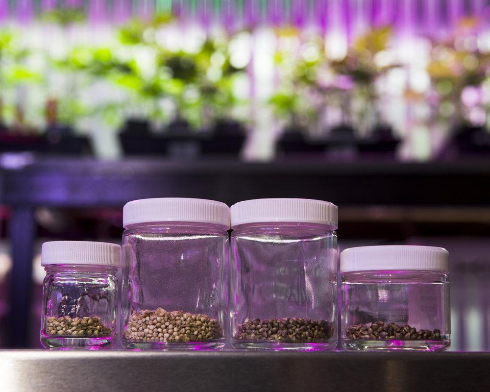 seeds-clones.jpg