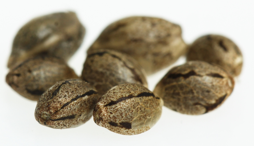 "Mature, viable cannabis seeds have a ""tiger stripe"" on the sides."