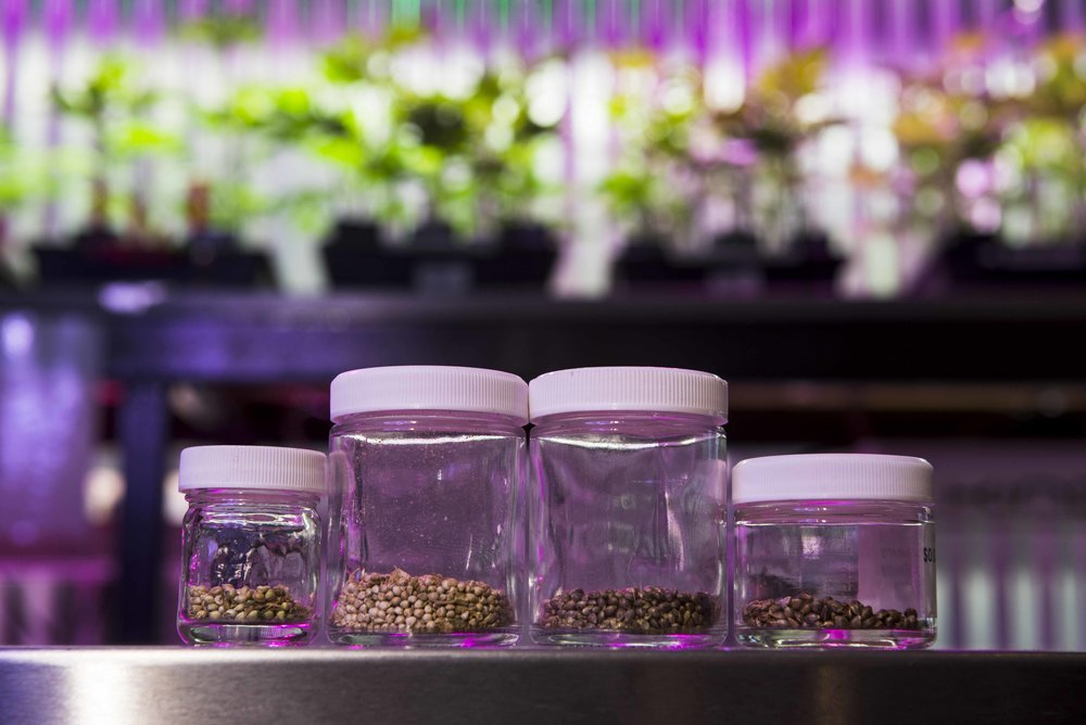 It's time to sprout your legal cannabis plants and get growing for summer!
