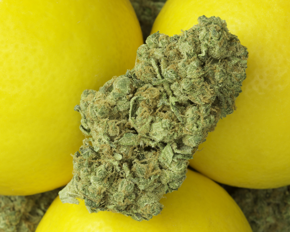 Top 10 Citrus-Flavored Cannabis Strains — KindPeoples