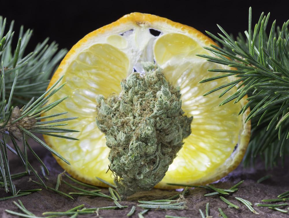 Citrus Sap.jpg