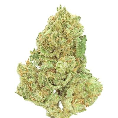 Jack Herer: A classic cannabis strain named in honor of a revolutionary activist. -