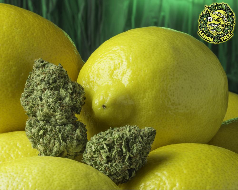 Lemon_Tree_Social.jpg
