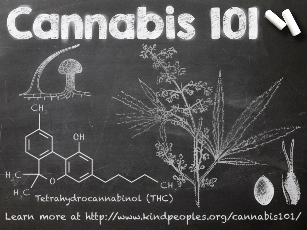 Cannabis_101_Ipad_Slide.jpg