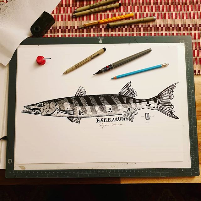 Barracuda. Drawing on bristol board with brush pen, Micron 1.0 pen & Montana black spraypaint sprayed with a needle cap. #barracuda #mtncolors #pentelbrushpen #micronpen #fishart