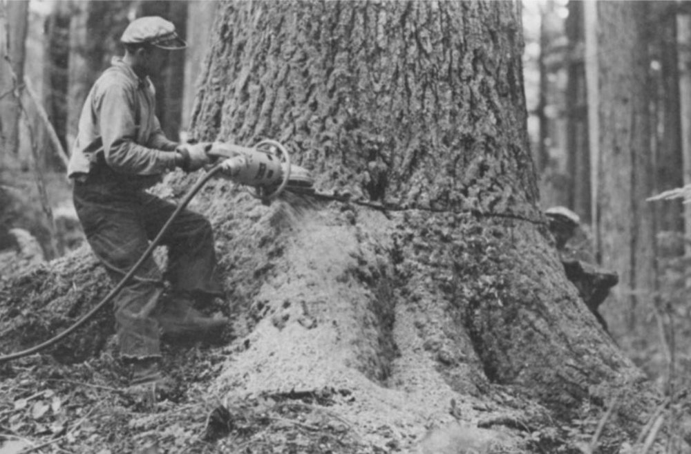 The first portable chainsaw built by PIW being used in the forests of the Pacific NW, photo from the US Forest service, also appears in  The Big Woods , by Ellis Lucia.