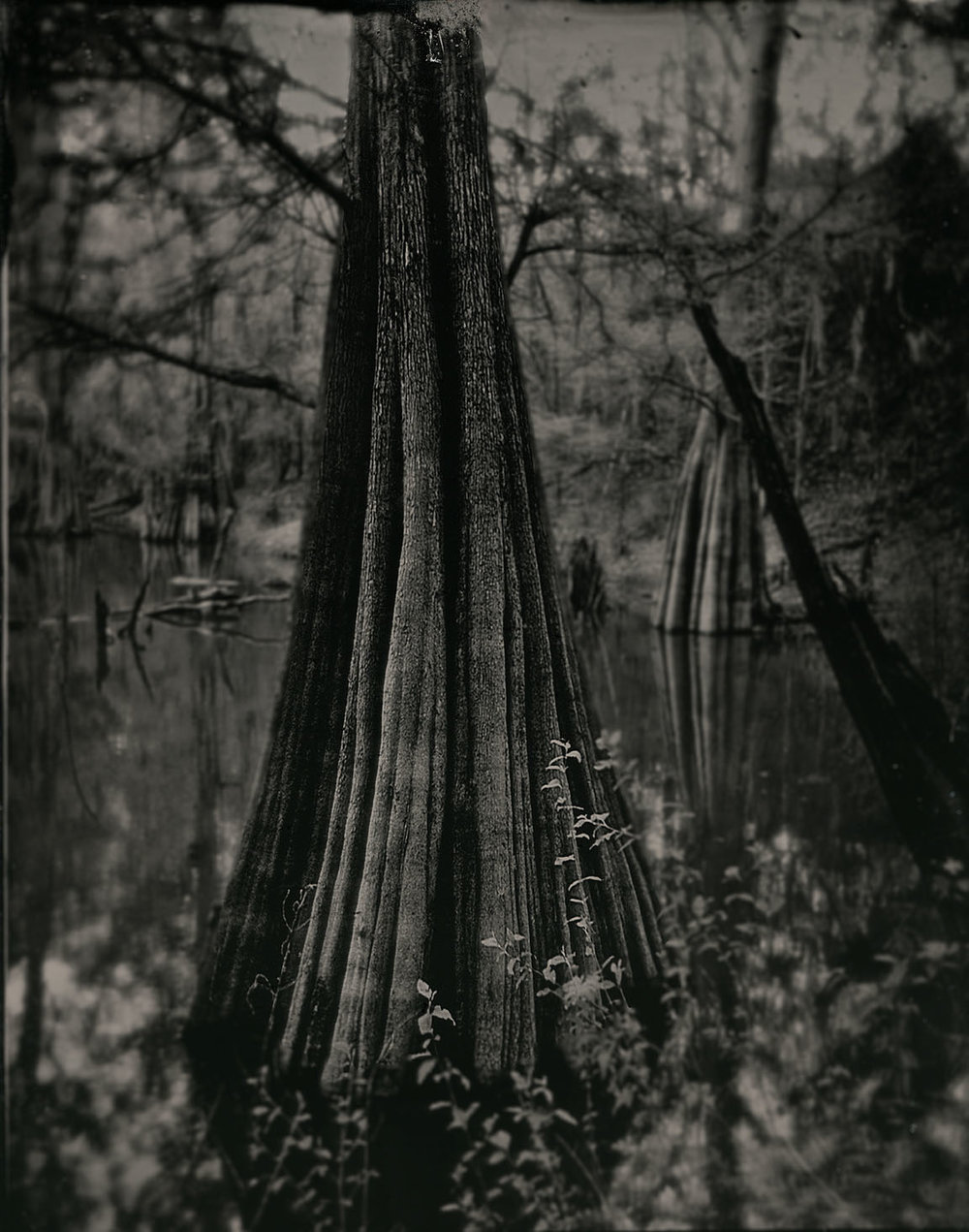 Swamp - Gary Geboy  www.garygeboyphotography.com