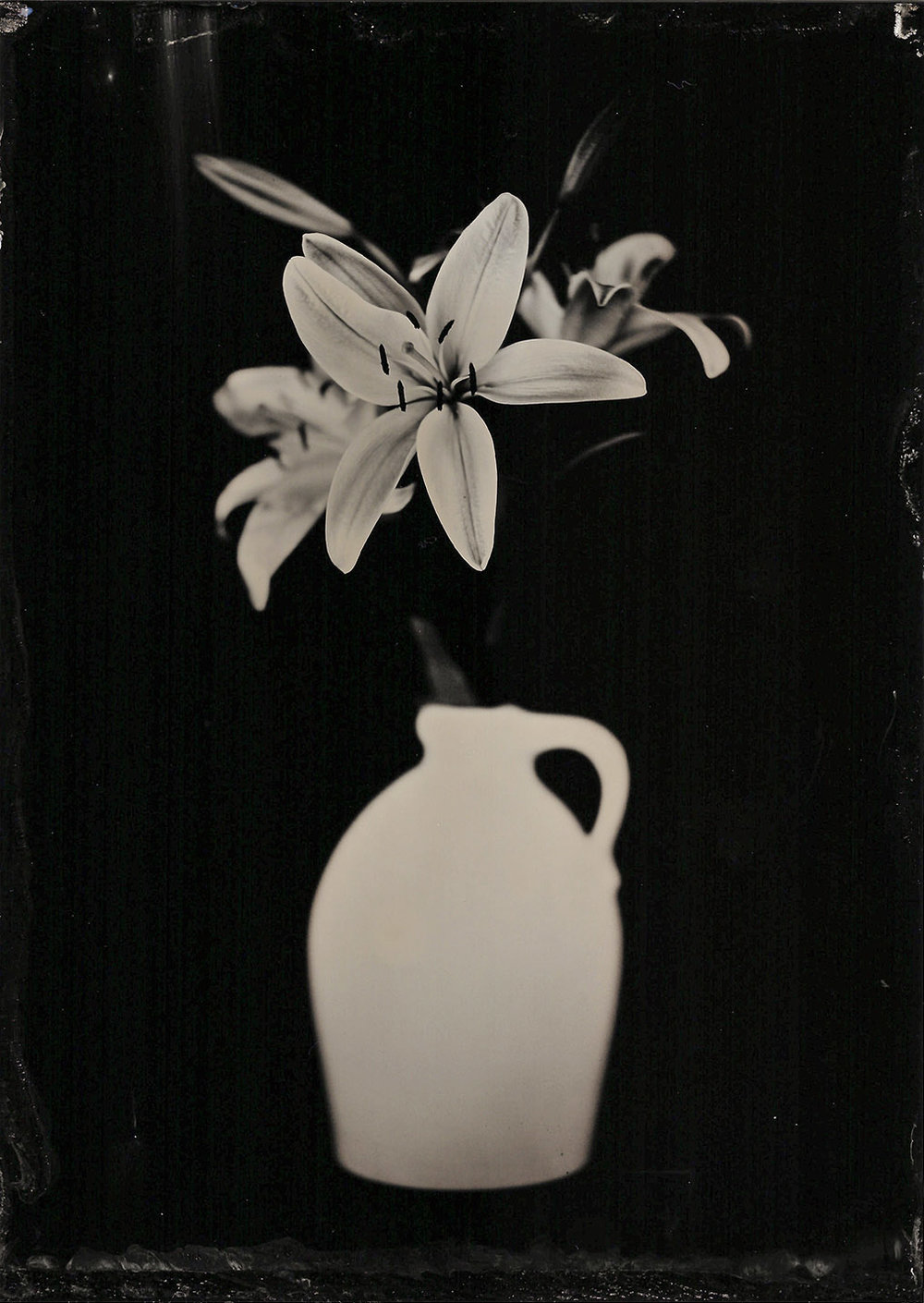 Lilies 1.31.18 - By:Michael Marano  www.973studio.com