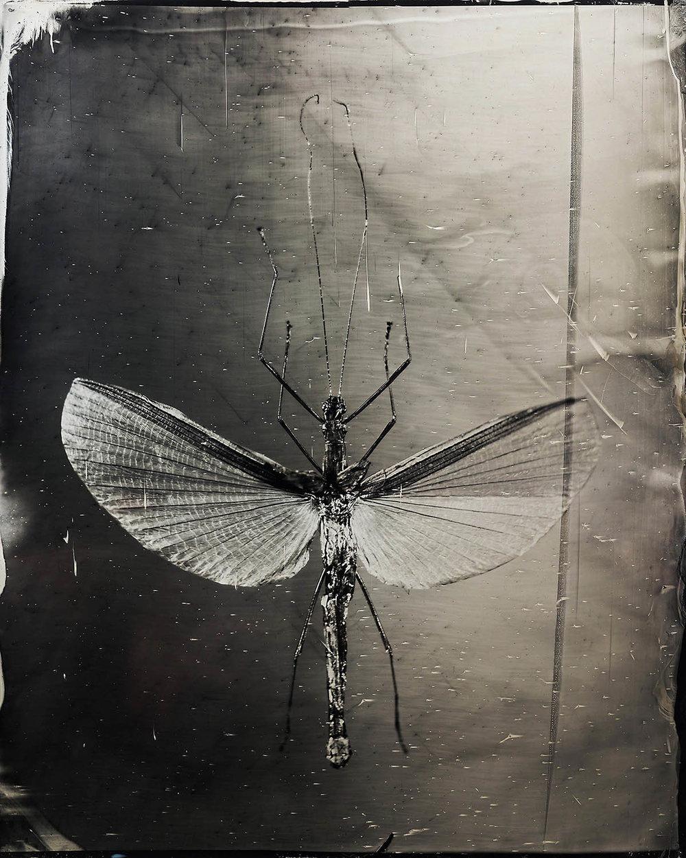 The Katydid - By:Maximilian Zeitler  www.maximilianzeitler.com