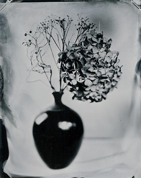 Hydrangea By: Karolina Ostrowska  www.karolostrowska.com