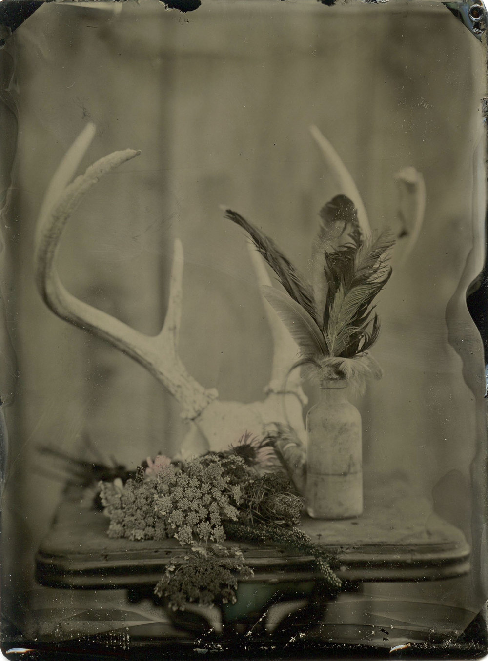 Title : Deer Wild One  By : Amanda Corbett  www.salvagesparrow.com