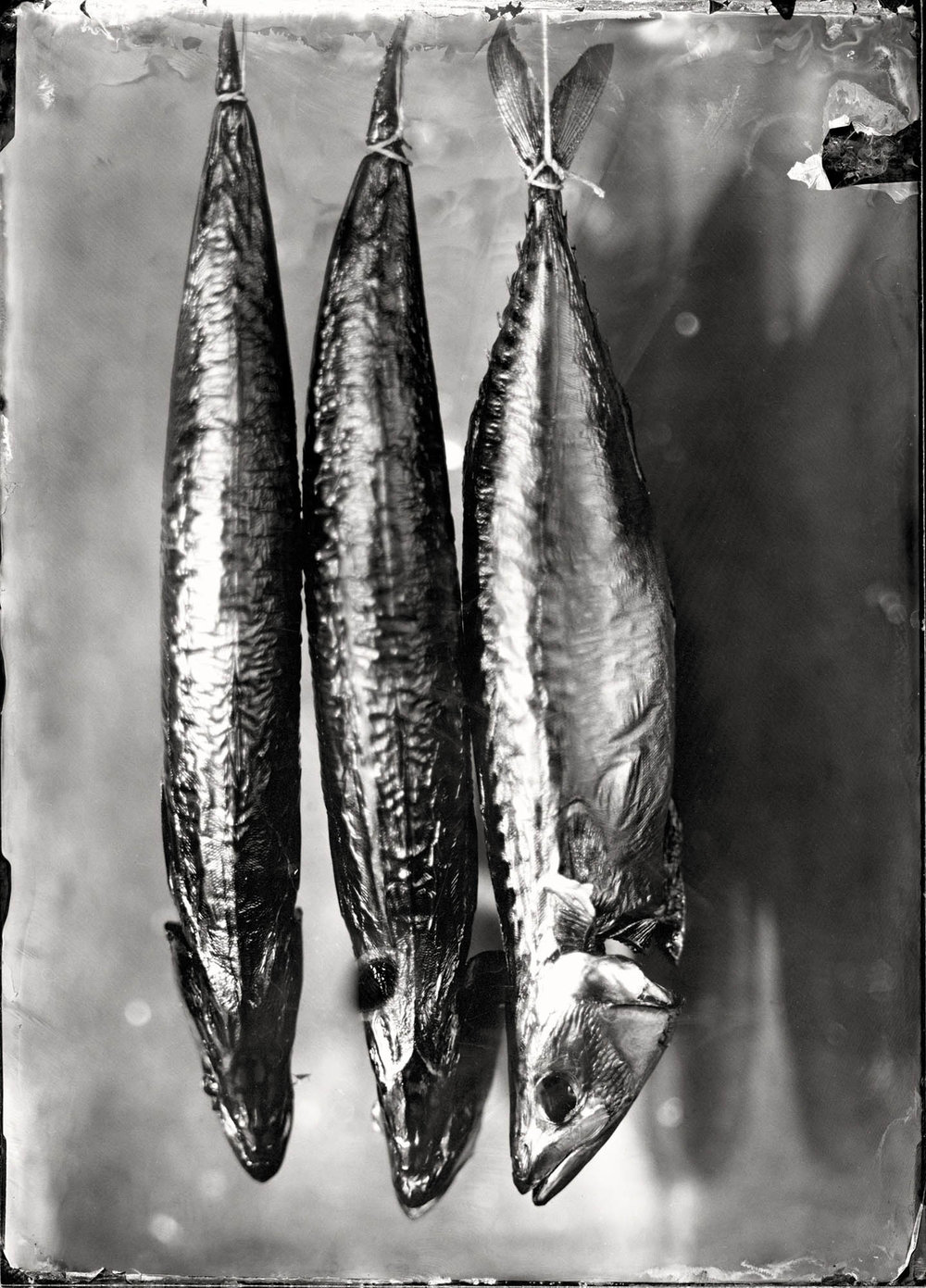 Title : Smoked Mackerel By: Peter  Eleveld    http://eleveld.net/blog/