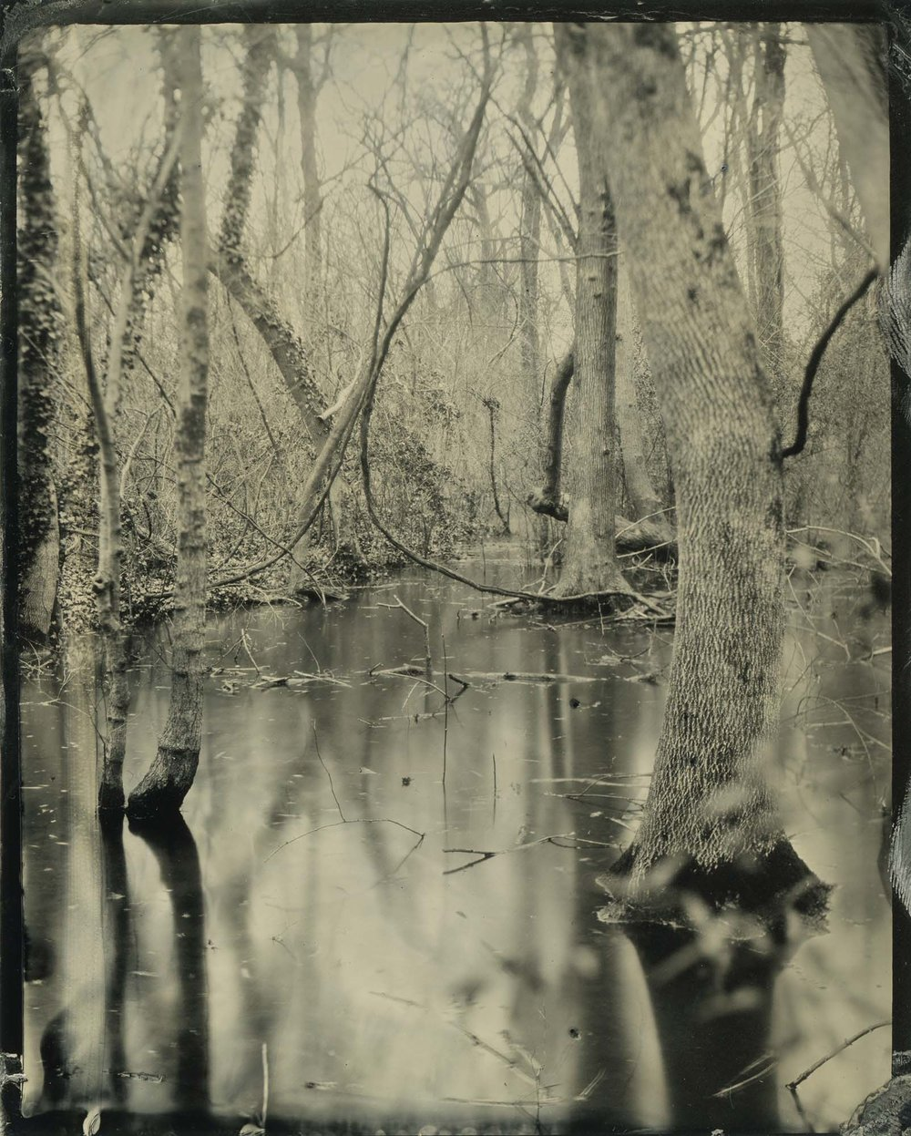 Title : Untitled Swamp By: Emily White    www.emwhitephoto.com