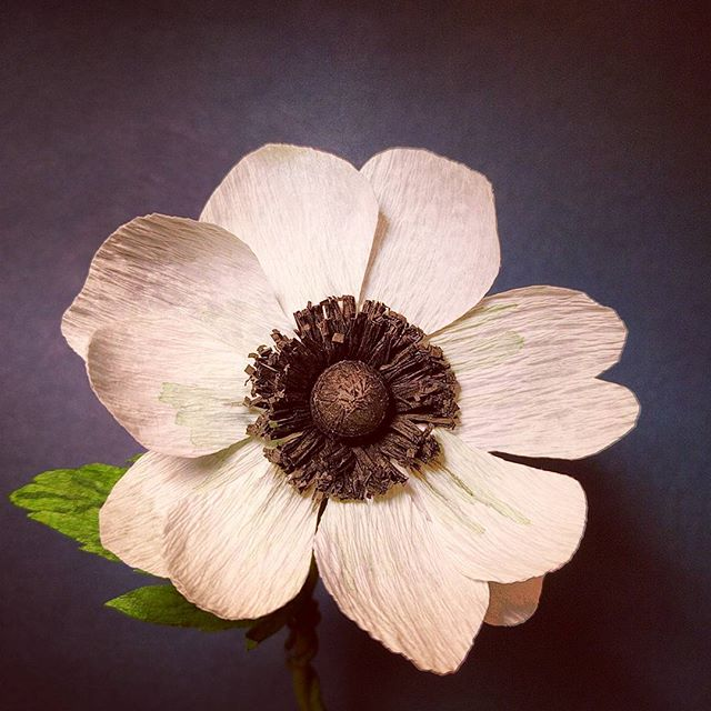 Excited about our crepe paper anemone workshop on Oct 22 and 23. Registration on our website jonesandposy.com!
