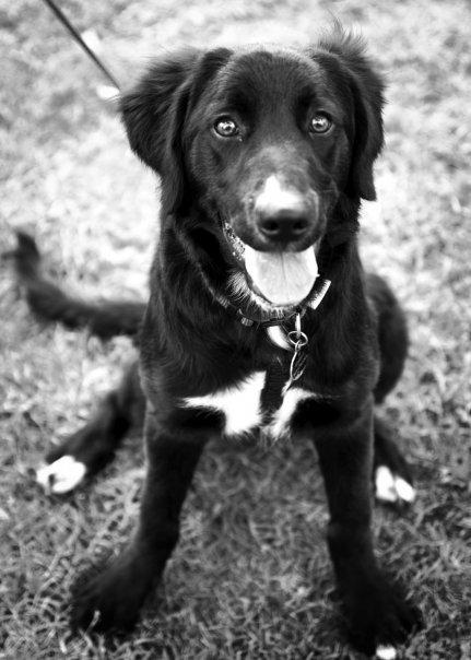 simone puppy