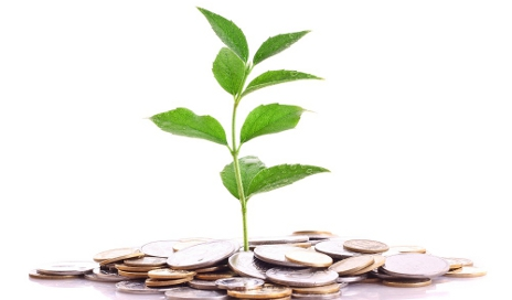money-plant_shutterstock_35780416.jpg