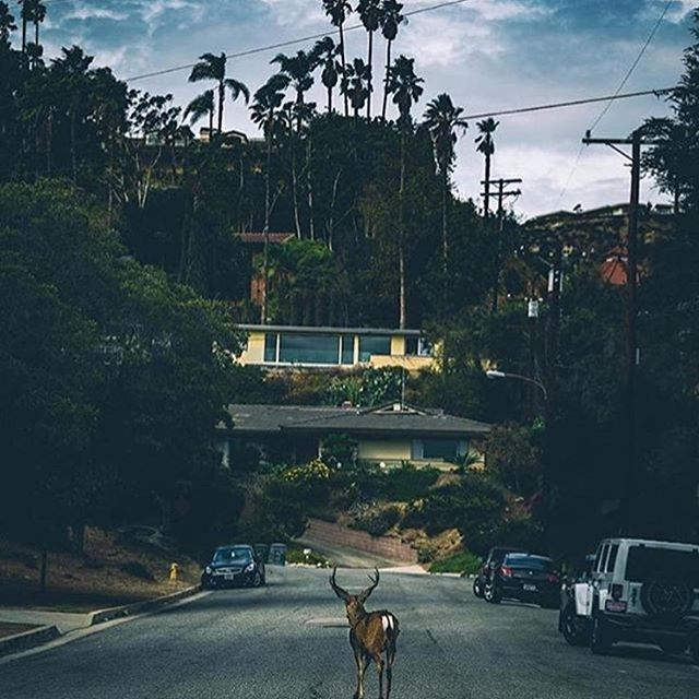 """We are quite *fawn'd* of this photo. Have a great day, everyone!"" Pun on point by @eventbritela 📷@cole_younger_"