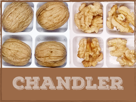 CHANDLER The Chandler walnut was introduced in 1979 by the University of California and is one of the most popular varieties grown in California today. Chandler walnuts are large in size, smooth, and oval shaped with a favorable shell seal. The kernels are known to be extra light and provide one of the highest kernel yields. Chandlers are harvested mid to late season.