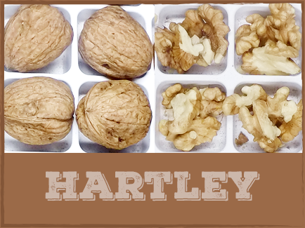 HARTLEY   Hartley walnuts have a mid to late harvest period and are a favorite choice to select in-shell markets. These walnuts have well sealed shells and have little susceptibility to disease and coddling moth.