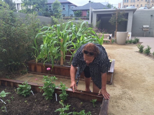 Margaret, one of our  Westminster Manor  residents, shows off her plot in the community garden.