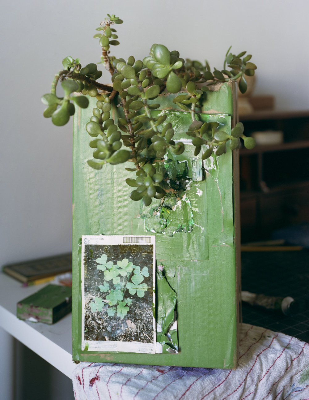 2 Plants.jpg