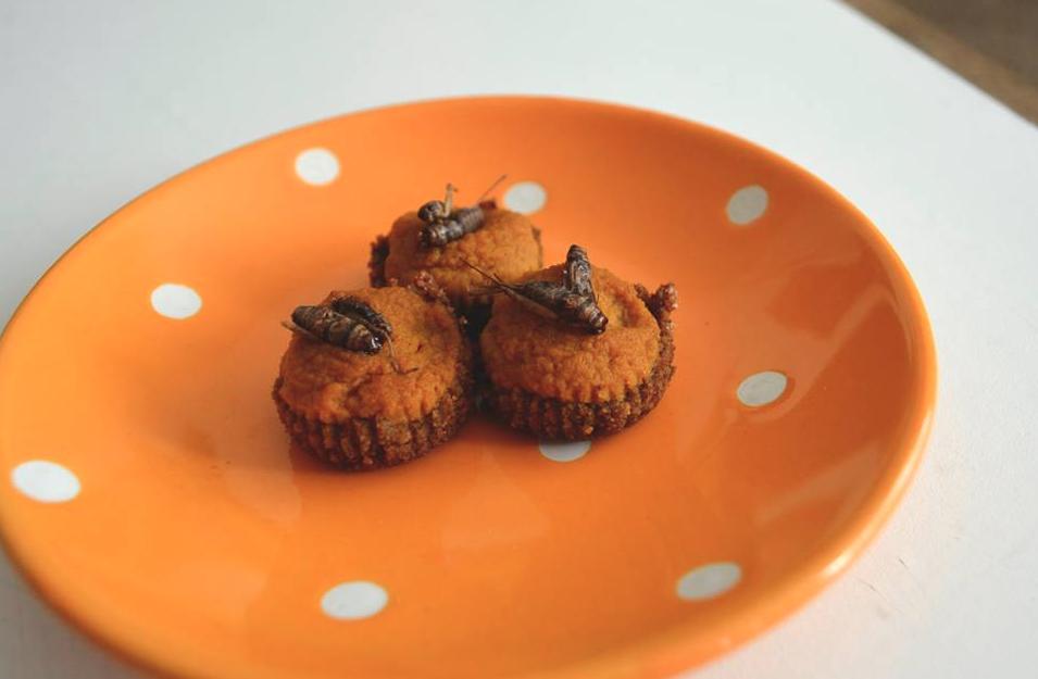 Mini Pumpkin Pie bites. Graham cracker cricket crust with cinnamon toasted crickets on top.