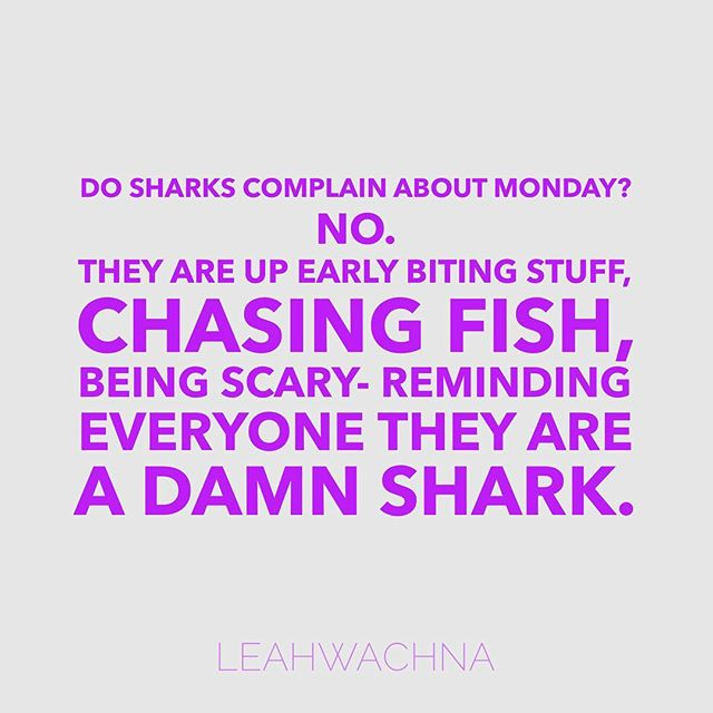 Go be a shark today 🦈 #motivationmonday