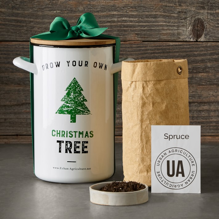 Grow Your Own Christmas Tree in a Pot.jpg