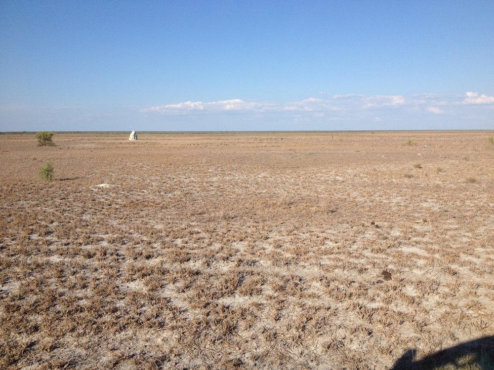 Roebuck Plains grassland at the end of a very dry 2016. Photo: John Graff