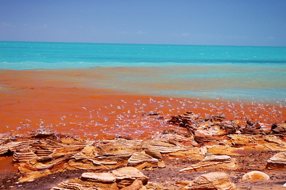 "Not ""just"" a migratory shorebird hotspot... the colours of Roebuck Bay are surreal."