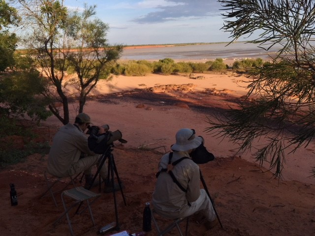 BBO staff scanning Roebuck Bay for possible migration