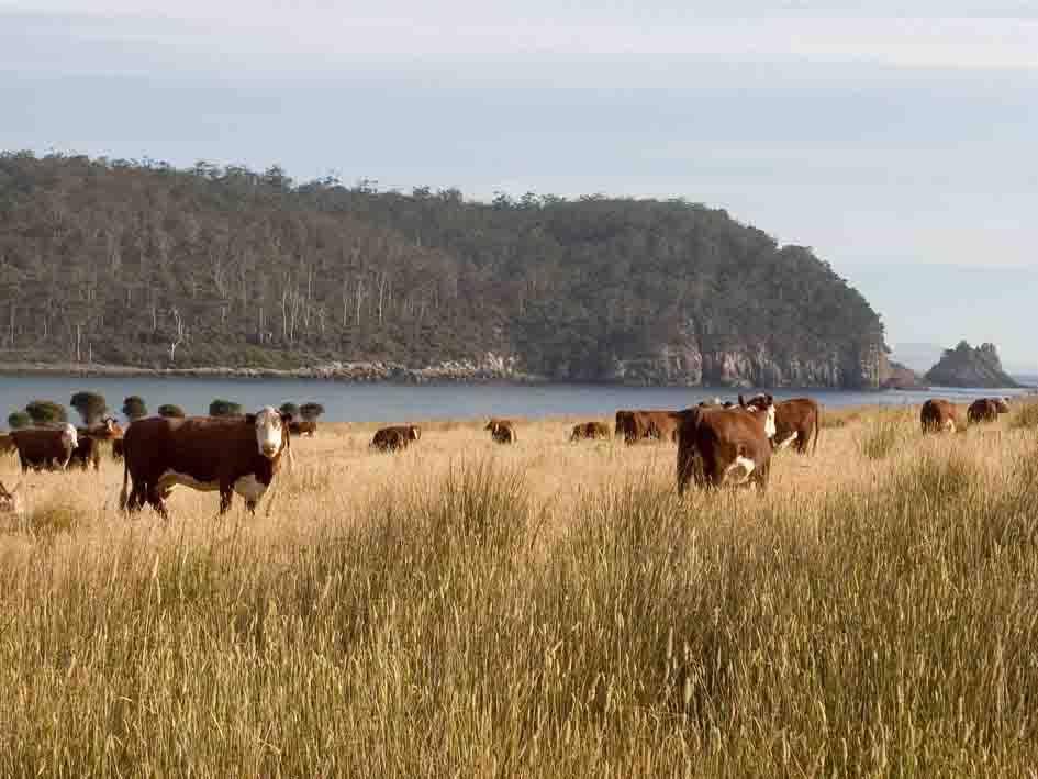 cattle house paddock.jpg
