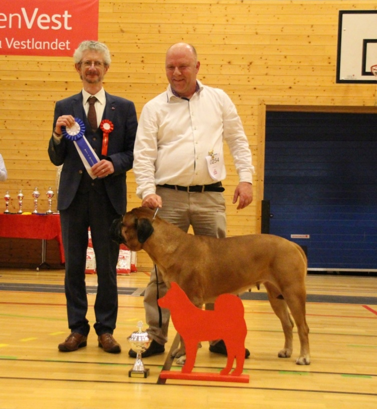 Gr. 2, Bullmastiff, The Secret Agnes Av Showmann