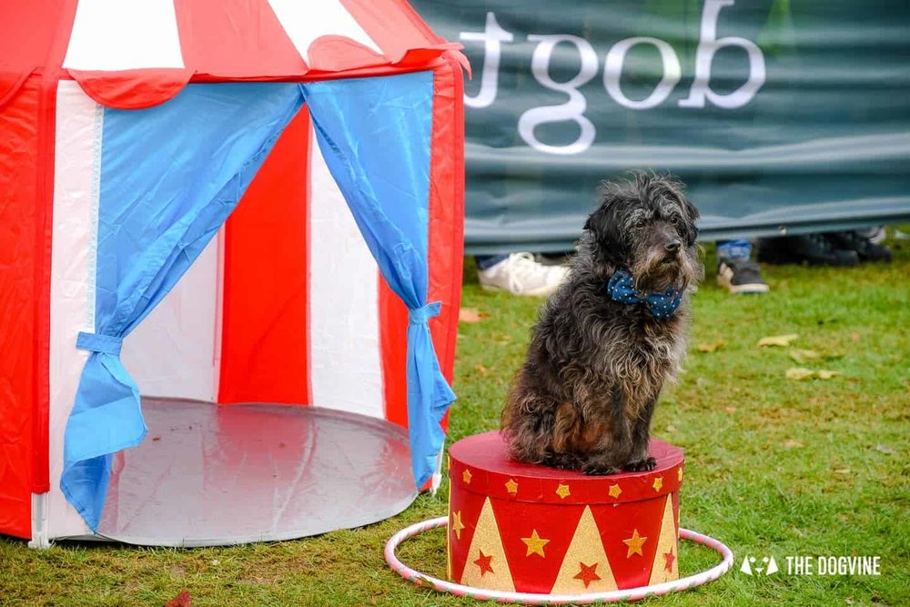 """The Chiswick House Dog Show 