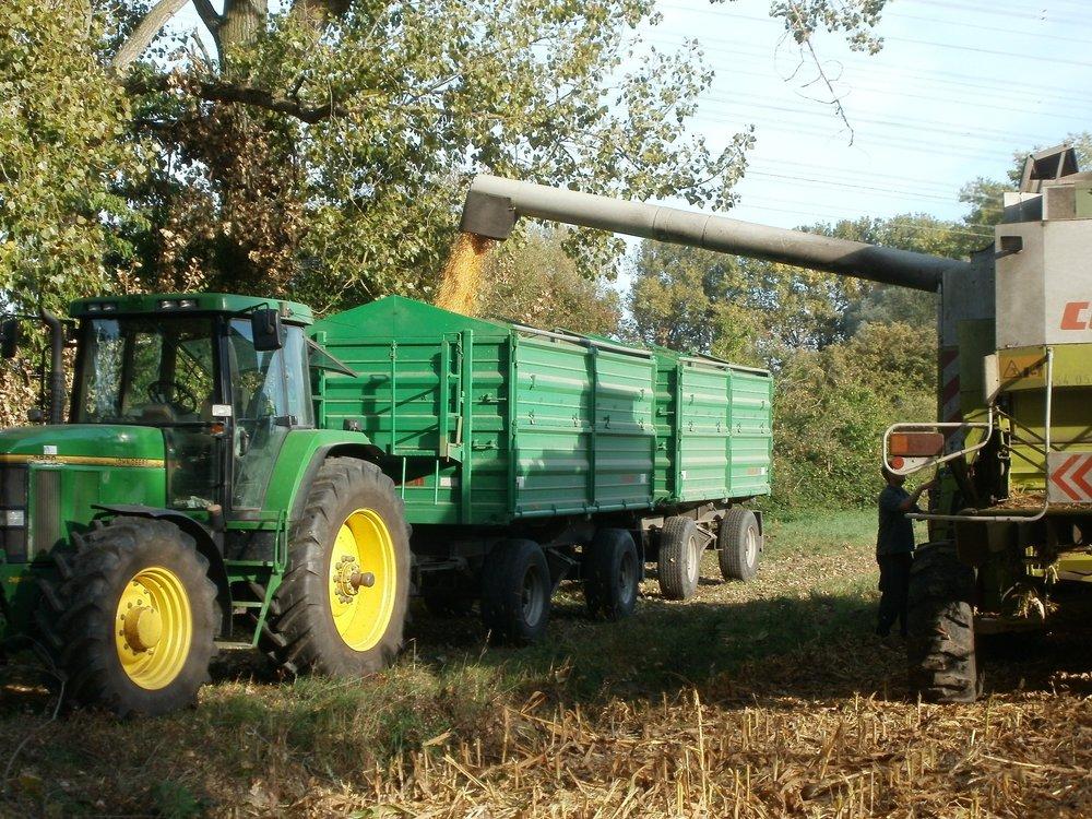 corn-837806.jpg