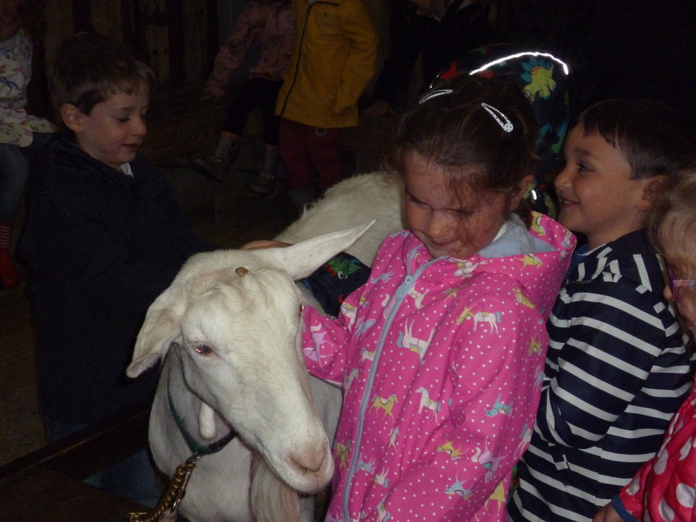 Learning about goats.