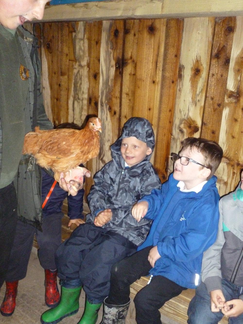 Meeting a hen.