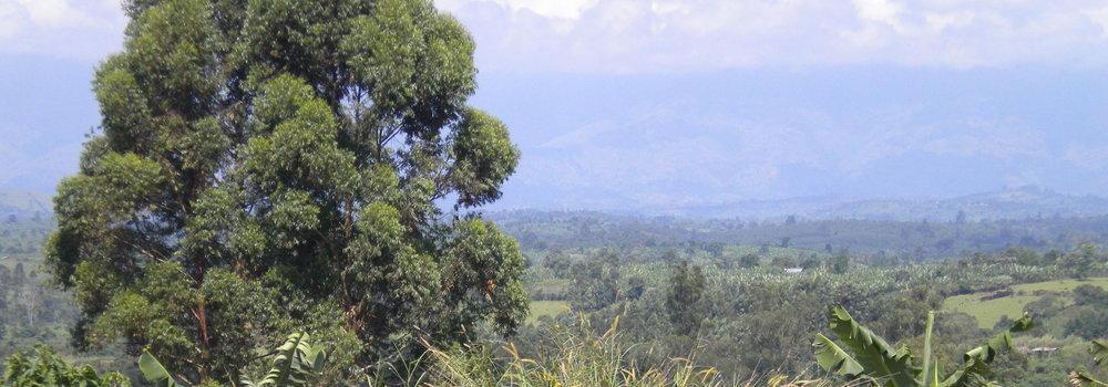 View towards the Ruwenzori Mountains