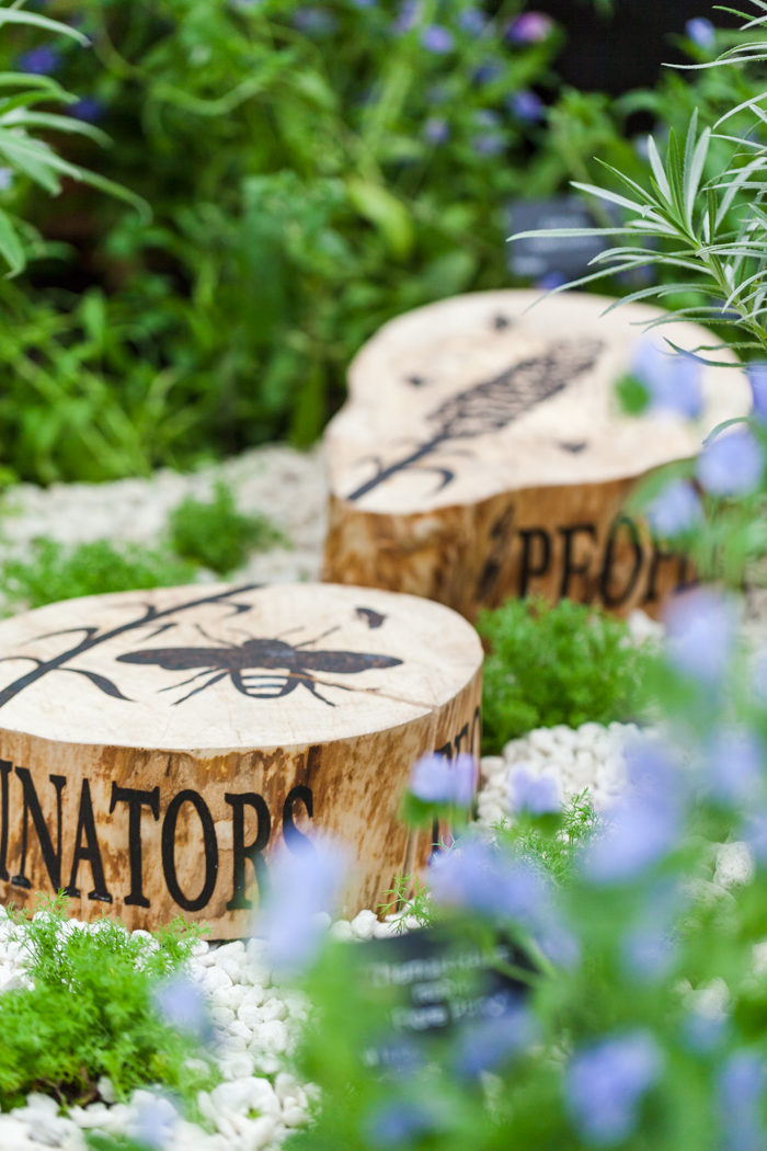 Hampton Court Flower Show 2016 - Katie Spicer Photography